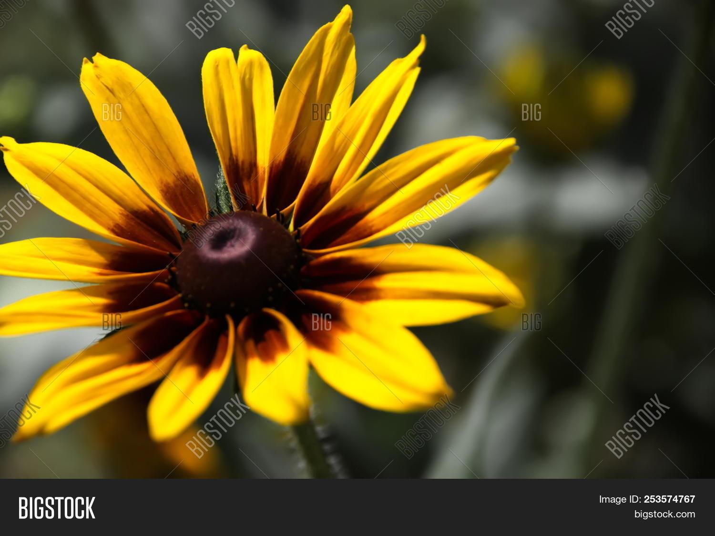 Yellow Spring Flowers Image Photo Free Trial Bigstock