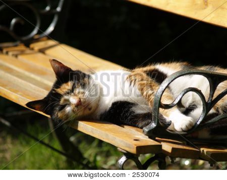 Blind cat lounging on a bench in the sun poster
