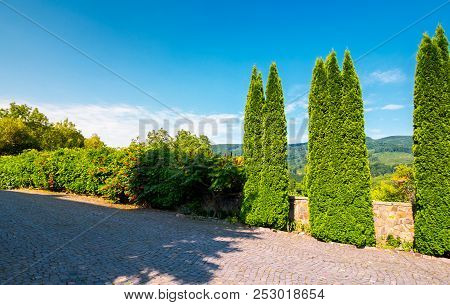 Cypresses Trees By The Wall In Pawed Yard. Beautiful Summer Countryside In Mountains. Wonderful Sunn