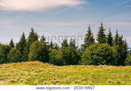 Shrubs And Fir Trees On The Edge Of A Grassy Meadow. Beautiful Nature Scenery In Fine Weather