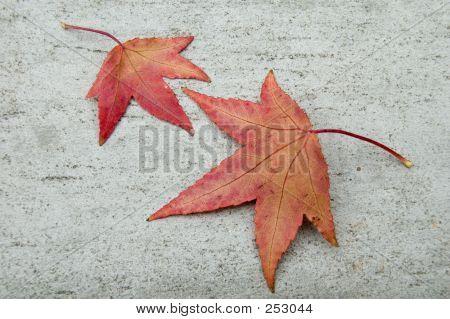 Two Fall Leafs On Grey Stone
