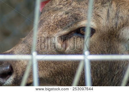 Close Up Photo Of Male Deer's Eye Through The Wire Cage In The Zoo
