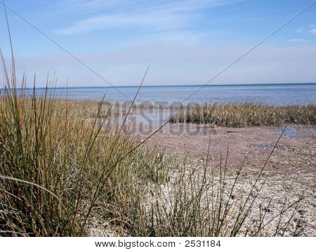 Marsh On The Bay