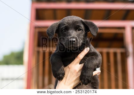 Close-up Of A Volunteer Is Holding A Black Homeless Puppy. Abandoned Scared Puppy From A Shelter Hop