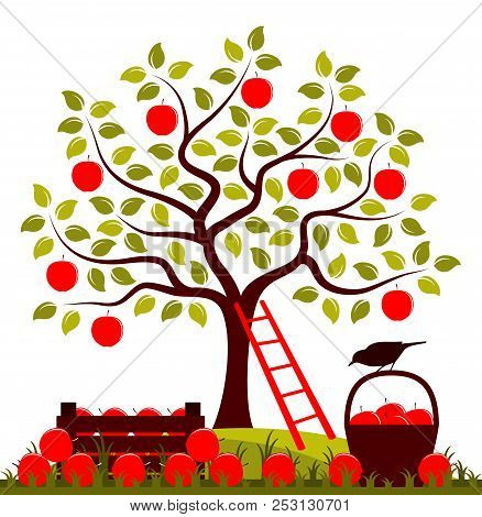 Vector Apple Tree, Wooden Crate Of Apples And Basket Of Apples Isolated On White Background
