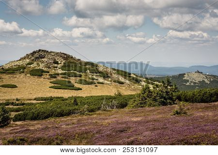 Giant Mountains In Poland, Central Europe, View With Cloudy Blue Sky, Rocky Green Hill And Violet Fl