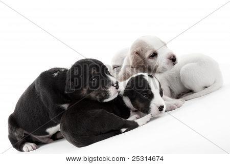 Three Cute Dozy Puppies