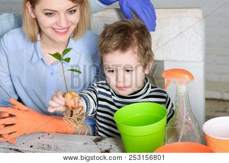 Planting Flower. Gardening. Planting. Mom With Son Planting Flower In Flowerpot. Cute Boy Helps Moth