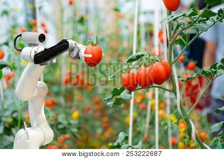 Smart Robotic Farmers In Agriculture Futuristic Robot Automation To Work To Spray Chemical Fertilize