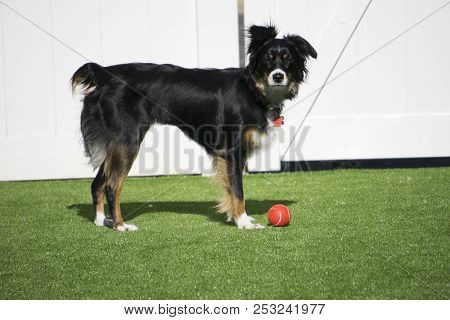 This Is An Image Of My Pup Playing Outside With Her Ball