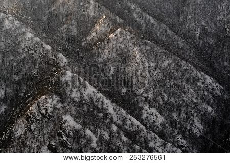 Snowy Hillside Of Naked Trees With Caps Lit By Evening Sun