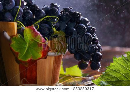 Ripe Grapes In A Wooden Bucket With Water Drops