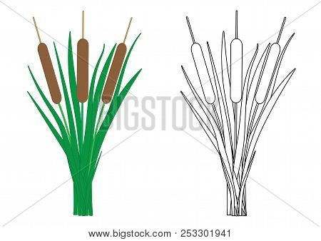 Reeds Colorful And In Black And White Colors, Coloring Page. Vector Illustration
