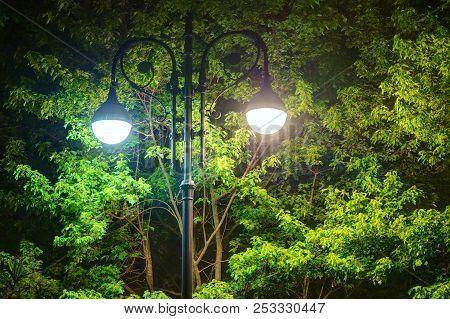 Luminous Wrought Ornate Street Light On The Background Of Foliage Of A Maple Tree At Night