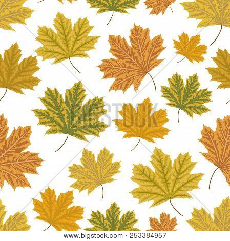 Mapple Leaves Seamless Pattern. Autumn Vector Background.