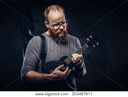 Redhead Bearded Male Musician Wearing Glasses Dressed In A Gray T-shirt Playing On A Ukulele. Isolat