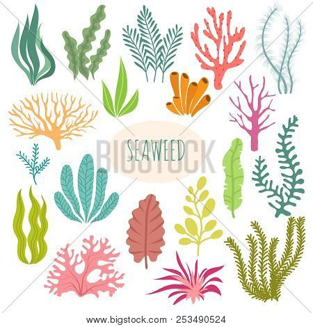 Seaweeds. Aquarium Plants, Underwater Planting. Vector Seaweed Silhouette Isolated Set. Illustration