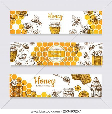 Honey Banners. Vintage Hand Drawn Bee And Honeyed Flower, Honeycomb And Hive Vector Labels. Illustra
