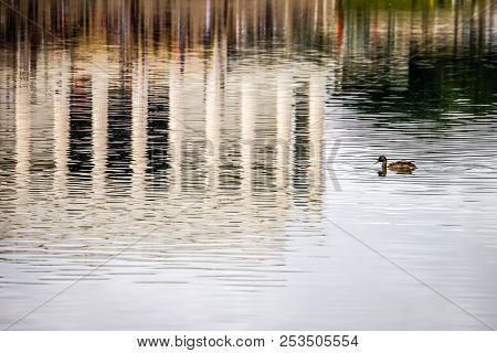 A Duck Swimming In Reflecting Pool Near The Lincoln Memorial At The National Mall In Washington Dc.
