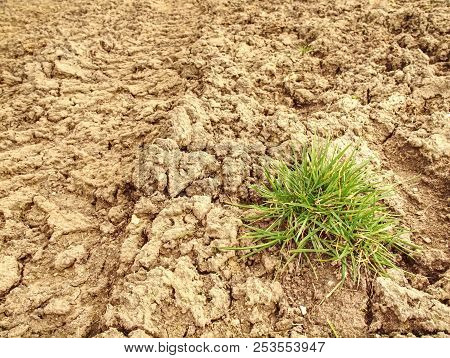 Dry grass turf on hard dry clay. Green plant sprouts in arid desert, life in the desert poster