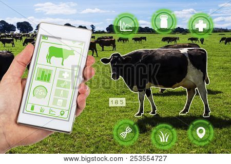 Agritech Concept Showing A Herd Of Dairy Cows In A Field With Farmer Accessing Selected Cows Data An