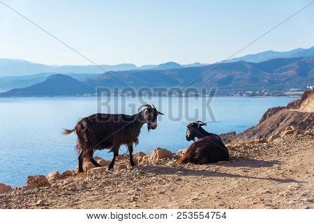 Local Goats On The Rocky Road Against The Sea And The Island, Crete, Greece