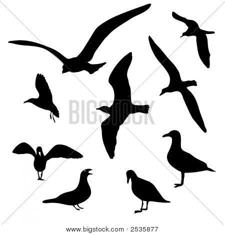 Seagull Collection.Eps