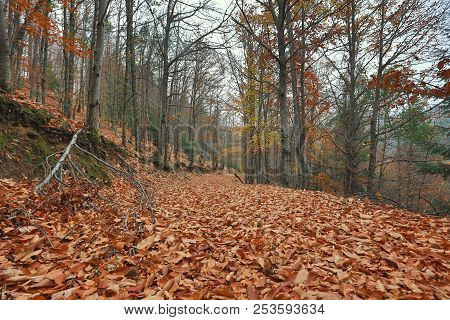 Beautiful Typical Autumn Landscape