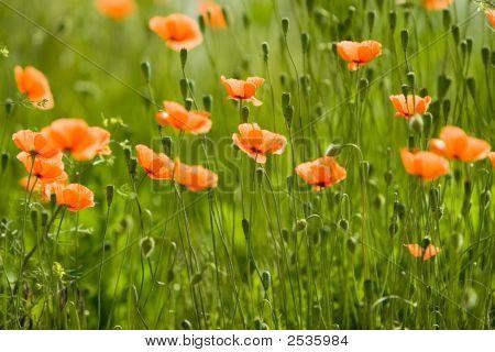 Orange Flower Forest