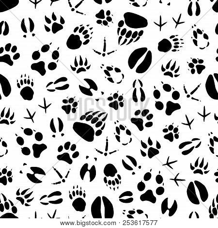 Animal Track Seamless Pattern Background Of Wild Mammal And Bird Footprint. Bear, Dog And Wolf, Tige