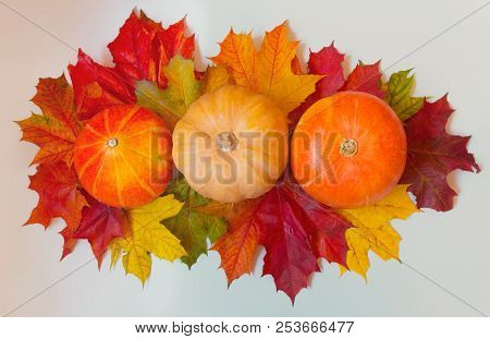 Pumpkins And Autumn Maple Leaves On Gray Background. Autumn Border.