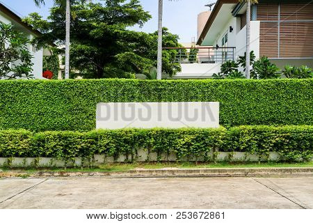Concrete Wall And Plant Pattern Wall Fence Nature
