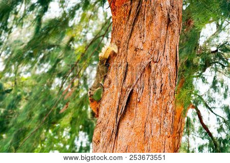Squirrel Has Smell Something On Branch Tree