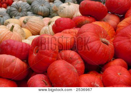 Various Colored Pumpkins