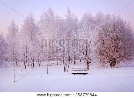 Winter Nature, Snow And Snowy Trees  And Bench On Sunrise