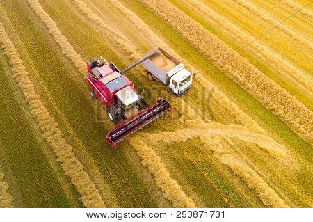 Harvesting. Combine Harvester Pours Grain Into Truck View From Above. Autumn Agricultural Background