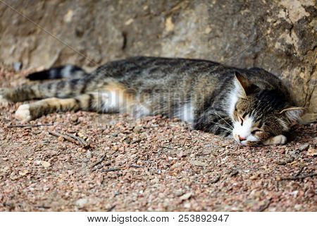 Cat sleeps on the ground