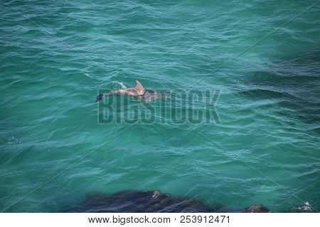 Save Download Preview Wild Dolphin Swims In Clear Blue Ocean Water Of Seaside, Sea Life Dolphin Swim