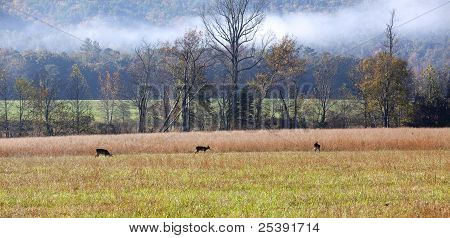 Morning Deer In Meadow