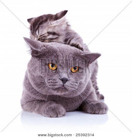 Cute Playful Cats