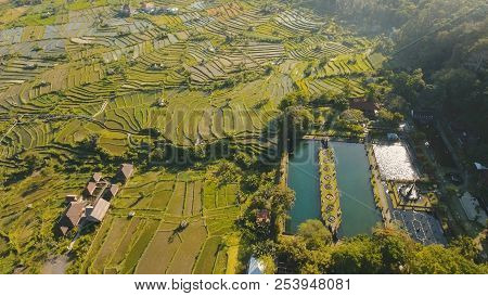Rice Terrace Field In The Mountains, Farmlands, Trees. Aerial View Of Rice Plantation, Terrace, Agri