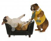 dog psychology - bulldog standing looking at another laying on a couch with reflection on white background poster
