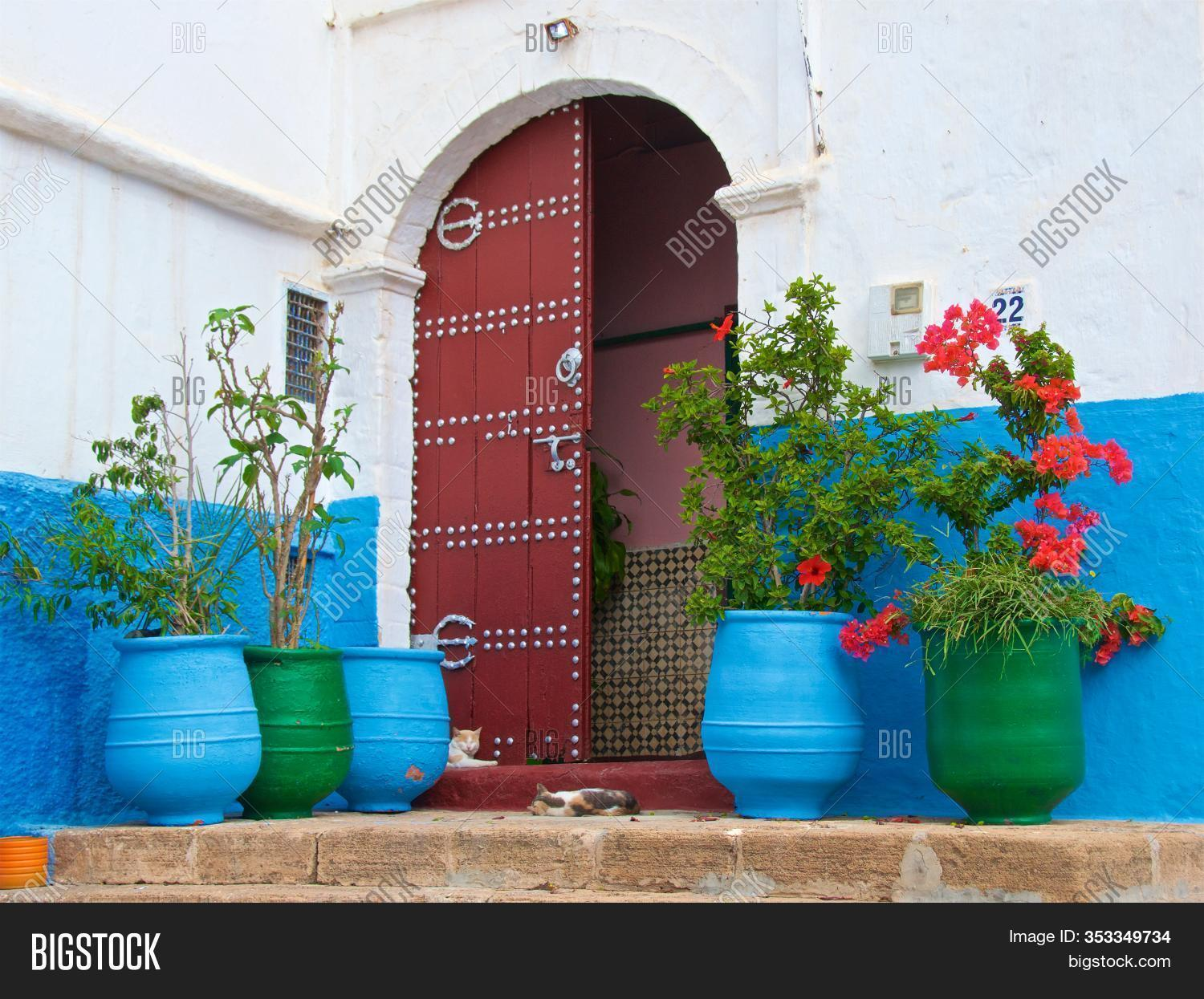 Colorful Flower Pots Image Photo Free Trial Bigstock