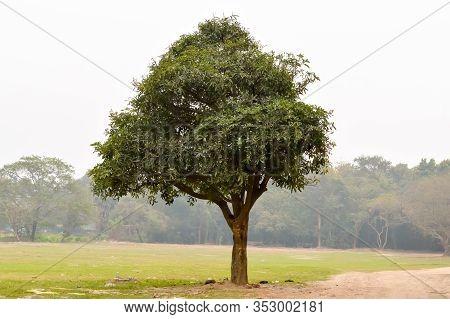 A Single Oak Tree On A Meadow In Sunset Summer Time. Rural Landscape Scene. Environmental Conservati