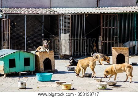 A Lot Of Stray Dogs In The Shelter. Homeless Pets In A Shelter For Stray Animals. Concept Of Homeles