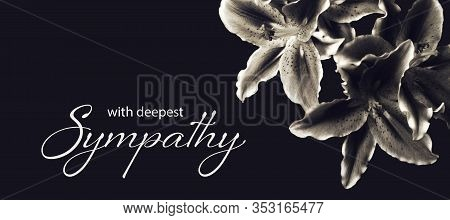 Sympathy Card With Lily Flowers Isolated On Dark Background