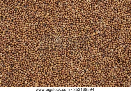 This Is The Food Background Of Coriander Fruit. Solid Brown Natural Background Consists Of A Scatter
