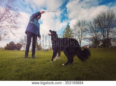 Obedient Purebred Border Collie Dog Playing Games Outdoors In The Park As Master Is Ready To Throw H