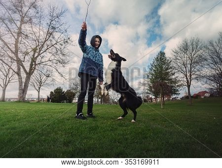 Master Holding A Stick Training His Obedient Dog Outdoors In The Park. Well Trained Healthy Border C