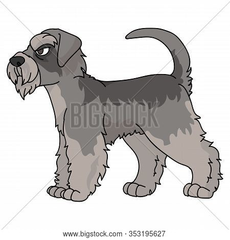 Cute Cartoon Schnauzer Dog Vector Clipart. Pedigree Kennel Doggie Breed For Dog Lovers. Purebred Dom